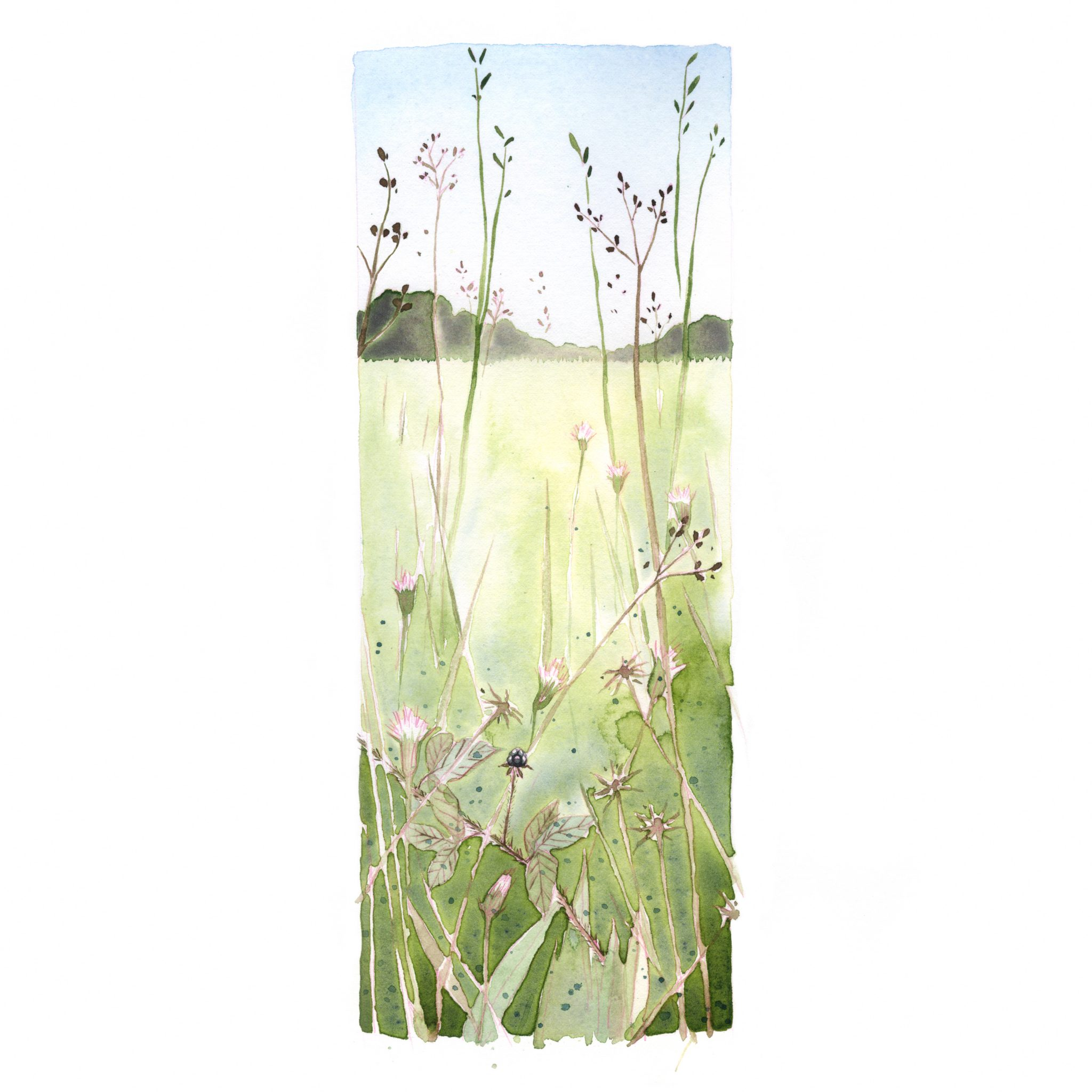 A watercolor painting od a field, a dewberry is in the foreground.
